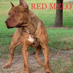 Redmello_9-9-19v2